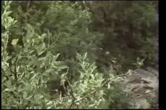 Wide shot  of skull in bushes Stock Footage