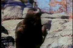 Close-up of  hawk on rock Stock Footage
