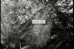 direction sign to albuquerque, new mexico tacked to tree - stock footage