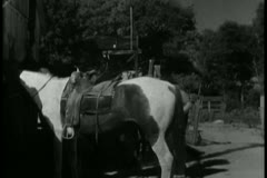 Stock Video Footage of cowboys mounting their horses in a hurry
