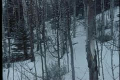 Panning shot of bare trees in winter forest Stock Footage