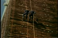 Stock Video Footage of low angle view of stunt men scaling building