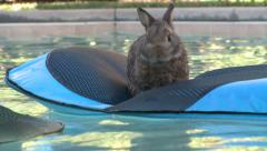SWIMMING BUNNY RABBIT FLOATING ON RAFT COOLING OFF HD 1080 - stock footage