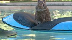 SWIMMING BUNNY RABBIT FLOATING ON RAFT COOLING OFF HD 1080 Stock Footage