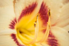 White lily flower macro abstract Stock Photos