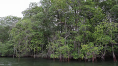 Colombia swamp by boat 1 Stock Footage
