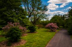 path through trees and bushes at cylburn arboretum, baltimore, maryland. - stock photo