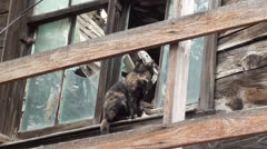 Cat in window of derelict house 2 Stock Footage