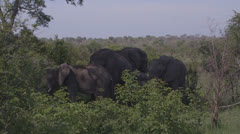 Elephants in the shade Stock Footage