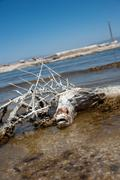 Toxic salton sea - stock photo