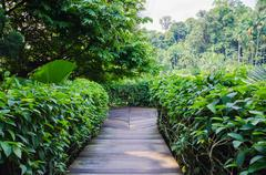 walkway path through the garden - stock photo