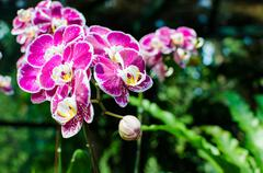 beautiful bright orchid flowers in botanical garden - stock photo