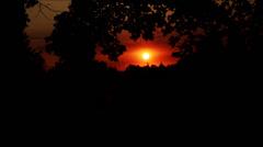 Sunset, dusk in trees Stock Footage