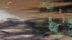 Creek Shore Stock Footage