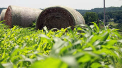 Hay bale and Corn Stock Footage