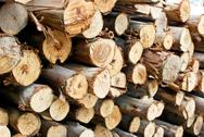 Stock Photo of pile of wood in logs storage