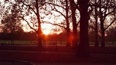Sunset autumn (fall) park - stock footage