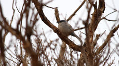 Song Bird Hanging Out Near Garden of The Gods Stock Footage