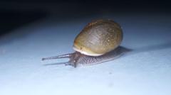 A Snail Slugs Along A Patio Floor On A Rainy Night 01 Stock Footage
