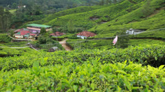 Landscape of green tea plantations. Munnar, Kerala, India Stock Footage