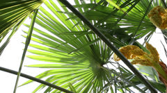 Palm leaves 1 Stock Footage
