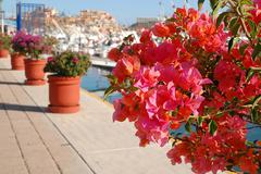 Pink bougainvillea of marina cabo san lucas - stock photo