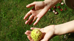 Handful of conkers with blurred green background Stock Footage