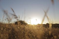 Wild Grass Field - Sunset 1 - stock photo