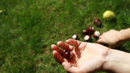 Stock Video Footage of Handful of conkers with blurred green background
