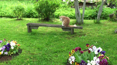 Cat washing himself in the garden Stock Footage