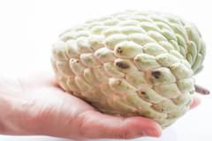 fresh custard apple hand hold isolated on white background - stock photo