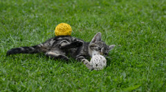 Playing kitten - stock footage
