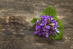 Stock Photo of spring violets flowers