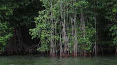 Colombia Swamp by boat 2 Stock Footage