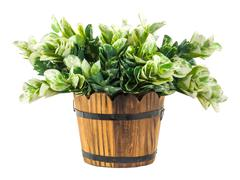 Artificial green branches in wood bucket Stock Photos