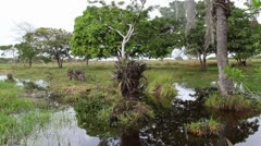 Wetlands pond 2 Colombia Stock Footage