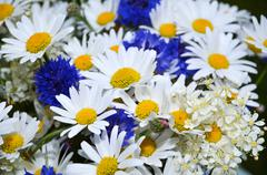summerflowers - stock photo