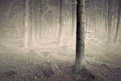 Tree in spooky gfrest Stock Photos