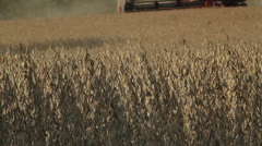 Soybean combine approaching at three quarters slow tilt up low angle Stock Footage