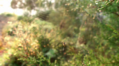 Orb-weaver spider at the spiderweb. Stock Footage