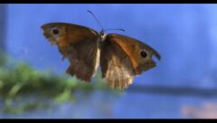 BUTTERFLY FLYING IN SLOW MOTION Stock Footage