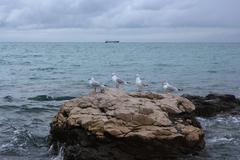 Four seagulls on the rock, Adriatic seascape - stock photo