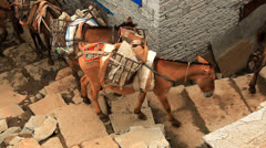Transportation of freights on mules. Stock Footage