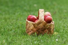 Wicker basket full of gala apples Stock Photos
