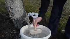 Gardener whitening fruit tree trunk garden first spring work Stock Footage