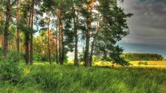 Green Forest. HDR Timelapse Shot Motorized Slider Stock Footage
