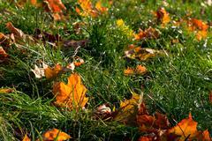 Leafless foliage Stock Photos