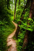 trees along a trail through lush green forest in codorus state park, pennsylv - stock photo