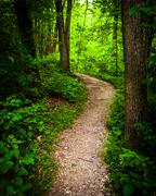 trail through lush green forest in codorus state park, pennsylvania. - stock photo