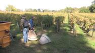 Stock Video Footage of Bordeaux Wine Harvest